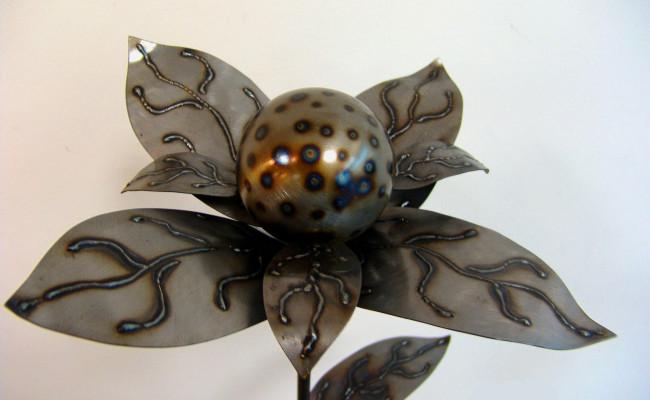 Blume6B